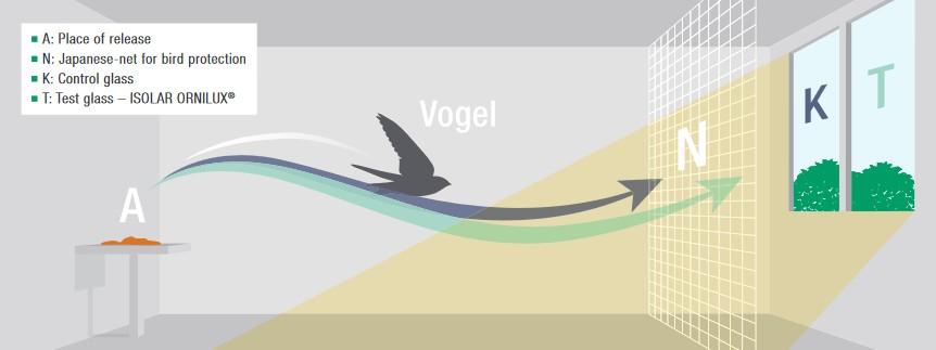 Metoda badania: w specjalnym tunelu wypuszcza się ptaka (A) w kierunku dwóch szyb: T - szkła testowanego (ISOLAR ORNILUX®) i K - szkła kontrolnego. Kolizji ptaków zapobiega cienkia siatka (N) umieszczona przed szybą.